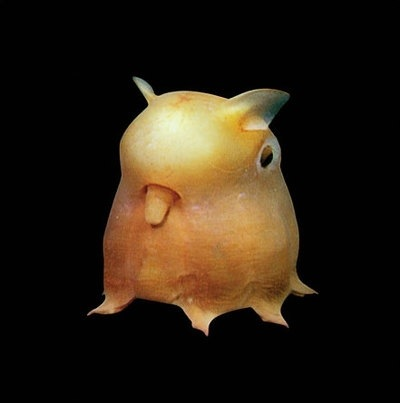 Its called a Dumbo Fish